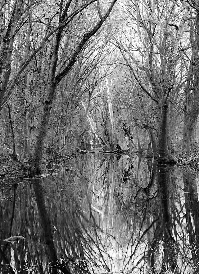 The Obear Millrace, a branch of the Wabash & Erie Canal near Delphi Indiana, still holds water that reflects the forest that has regrown from mid-1800's.  Part of the Delphi trail system will take one to this spot.