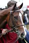 October 01, 2017, Chantilly, FRANCE -  Zonza at the Total Prix Marcel Boussac (Gr. I) at  Chantilly Race Course  [Copyright (c) Sandra Scherning/Eclipse Sportswire)]