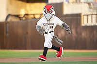 "Fayetteville Woodpeckers mascot ""Bunker"" runs the bases between innings of the game against the Salem Red Sox at Segra Stadium on May 15, 2019 in Fayetteville, North Carolina. The Woodpeckers defeated the Red Sox 6-2. (Brian Westerholt/Four Seam Images)"