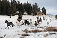 Cowboys working and playing. Cowboy Cowboy Photo Cowboy, Cowboy and Cowgirl photographs of western ranches working with horses and cattle by western cowboy photographer Jess Lee. Photographing ranches big and small in Wyoming,Montana,Idaho,Oregon,Colorado,Nevada,Arizona,Utah,New Mexico. Cowboys in winter photography Fine Art Limited Edition Photography Of American Cowboys and Cowgirls by Jess Lee