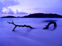Driftwood at Cinnamon Bay.Virgin Islands National Park.St. John, U.S. Virgin Islands, Living Art