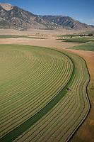 pivot irrigated crop harvest, aerial vieew, Mona, UT