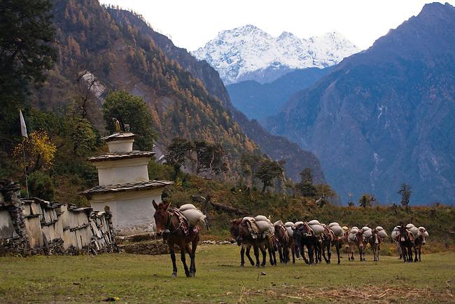 MULES haul supplies to a remote TIBETAN BUDDHIST MONASTERY - NEPAL
