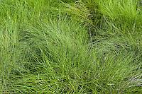 Fine sea grass.