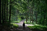 GERMANY, Teterow, forest / Burg Schlitz, Wald, Laubwald, Saechsische Schweiz