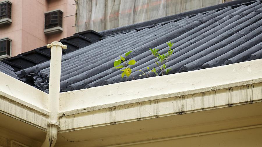 Roof detail, St Stephen's Girls' College, Lyttleton Road, Hong Kong Island.
