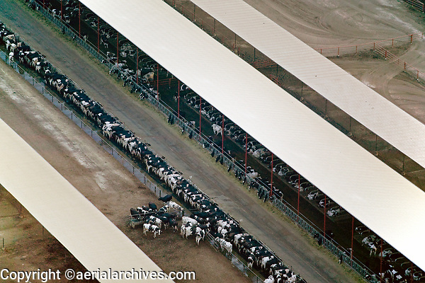 aerial photograph of cattle feeding in a feedlot in the California Central Valley