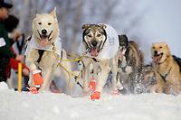 Rick Larsons sled dog team running down trail through Anchorage 2006 Iditarod Ceremonial Start Winter