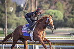 October 27, 2014: Majestic Presence exercises in preparation for the Breeders' Cup Juvenile Fillies at Santa Anita Park in Arcadia, California on October 27, 2014. Zoe Metz/ESW/CSM