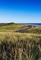 Lush dune grass and dunes bordering Head of the Meadow Beach, Truro, Cape Cod, Massachusetts, USA