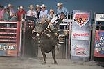 SEBRA - Lewisburg, WV - 8.16.2014 - Bulls & Action