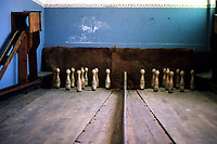 Desert miners town abandoned in 1954. Bowling room