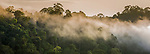 Early morning mist over the rainforest canopy. Temburong National Park, Brunei, Borneo.