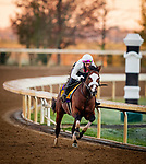 October 31, 2020: Tiz The Law, trained by trainer Barclay Tagg, exercises in preparation for the Breeders' Cup Classic at Keeneland Racetrack in Lexington, Kentucky on October 31, 2020. Alex Evers/Eclipse Sportswire/Breeders Cup