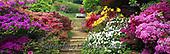 Tom Mackie, FLOWERS, BLUMEN, FLORES,garden,gardens photos+++++,GBTM200477-3,#f#, EVERYDAY