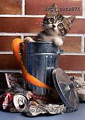 Xavier, ANIMALS, REALISTISCHE TIERE, ANIMALES REALISTICOS, cats, photos+++++,SPCHCATS871,#a#, EVERYDAY