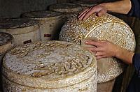 France/15/Cantal/Aurillac: Fromage AOC Cantal et Salers dans la cave d'affinage de Mr Morin Fromager affineur