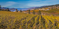 Fine Art Landscape Photograph of vineyards in British Columbia, Canada.<br /> Nestled in the South Okanagan Valley Okanagan Lake is surrounded by mountains, Orchards, and Vineyards. There are many hiking trails around this beautiful Lake.<br /> Email me to order a signed fine art photograph.