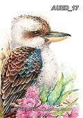 Carlie, REALISTIC ANIMALS, REALISTISCHE TIERE, ANIMALES REALISTICOS, paintings+++++Kookaburra,AUED17,#A#, EVERYDAY ,australian wildlife