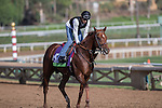 OCT 26 2014:Tom's Toribute trained by James Cassidy, exercises in preparation for the Breeders' Cup Mile at Santa Anita Race Course in Arcadia, California on October 26, 2014. Kazushi Ishida/ESW/CSM