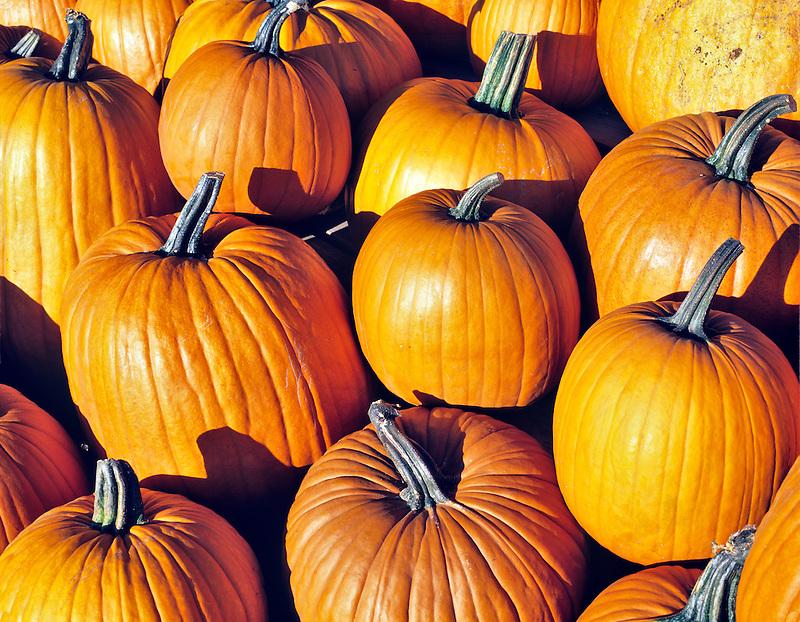 Close up of pumpkins. Oregon.