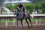 SHA TIN,HONG KONG-APRIL 30: Chautauqua ,trained by Michael Hawkes ,exercises in preparation for the Chairman's Sprint Prize at Sha Tin Racecourse on April 30,2016 in Sha Tin,New Territories,Hong Kong (Photo by Kaz Ishida/Eclipse Sportswire/Getty Images)