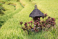 Jatiluwih, Bali, Indonesia.  Shrine to Sri, the Rice Goddess, in a Terraced Rice Paddy.