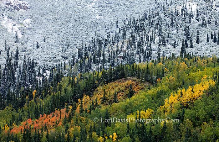 Fall vs. Winter