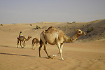 Camels in the desert one of the sights the race will pass during Stage 6 of the 2021 UAE Tour running 165km from Deira Island to Palm Jumeirah, Dubai, UAE. 26th February 2021.  <br /> Picture: Eoin Clarke   Cyclefile<br /> <br /> All photos usage must carry mandatory copyright credit (© Cyclefile   Eoin Clarke)