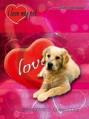 Alfredo, ANIMALS, dogs, photos+++++,BRTOXX02456CP,#a# Hunde, perros