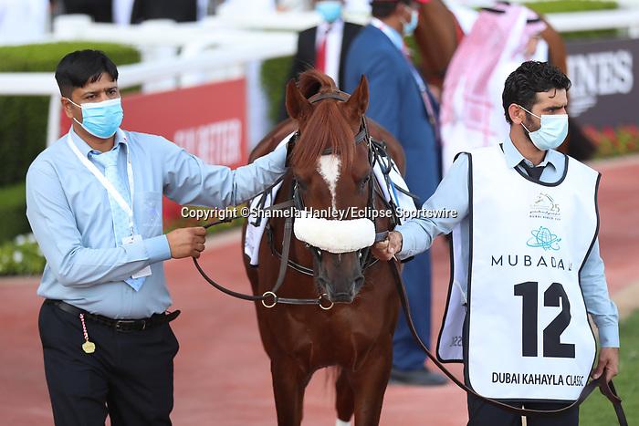 March 27 2021: RB FRYNCHH DUDE #12, in the post parade for the Dubai Kahayla Classic at Meydan Racecourse, Dubai, UAE. Shamela Hanley/Eclipse Sportswire/CSM