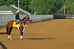 Mucho Macho Man steps onto the Churchill Downs track April 30, 2011 for a morning work.