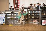 SEBRA - Chatham, VA - 2.22.2014 - Bulls & Action