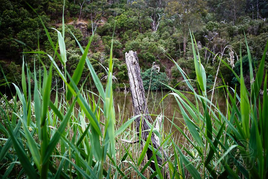 Image Ref: YV509<br /> Location: Mount Lofty, Wonga Park<br /> Date of Shot: 22.11.20