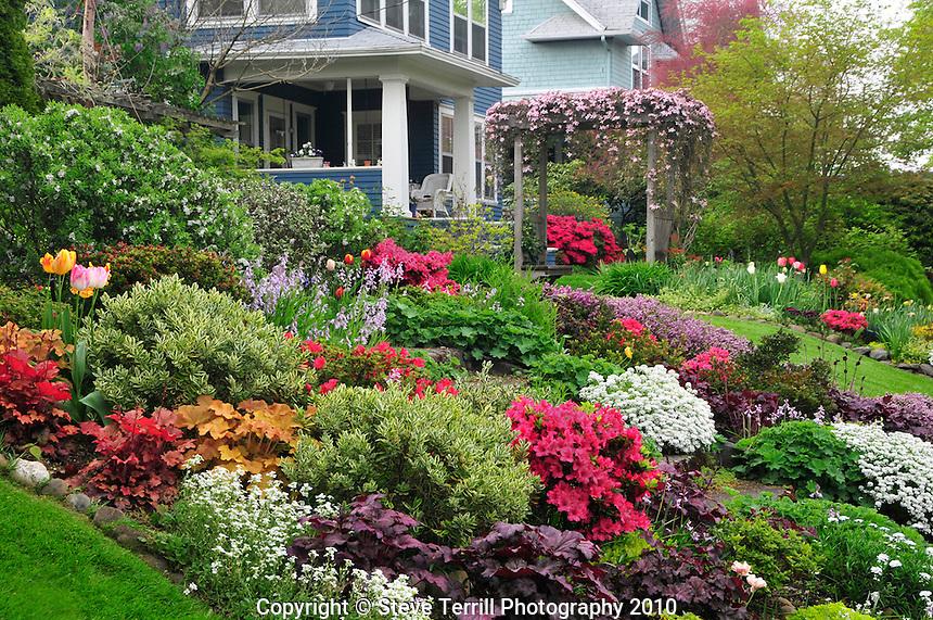 USA, Oregon, Spring blooms of tulips, azaleas, phlox & candytuft flowers in garden in NE Portland