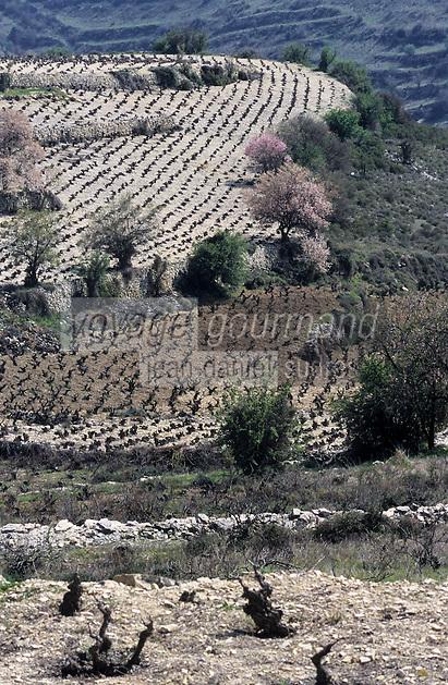 Europe/Chypre/Env d'Omodos : Le vignoble