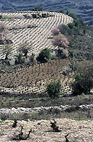 Europe/Chypre/Env d'Omodos : Le vignoble