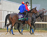 November 1, 2018 : Enable, trained by John Gosden, trains for the Breeders' Cup Turf with Frankie Dettori up at Churchill Downs on November 1, 2018 in Louisville, KY. Jessica Morgan/ESW/CSM