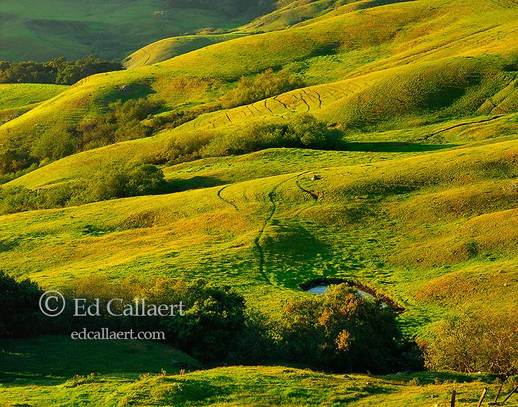 Hillside, El Sur Ranch, Big Sur, Los Padres National Forest, Monterey County, California