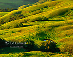 Hillside, El Sur Ranch, Big Sur, Los Padres National Forest, Monterey County, California