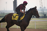 DUBAI,UNITED ARAB EMIRATES-MARCH 23: Long Island Sound,trained by Aidan O'Brien,exercises in preparation for the Dubai Turf at Meydan Racecourse on March 23,2017 in Dubai,United Arab Emirates (Photo by Kaz Ishida/Eclipse Sportswire/Getty Images)