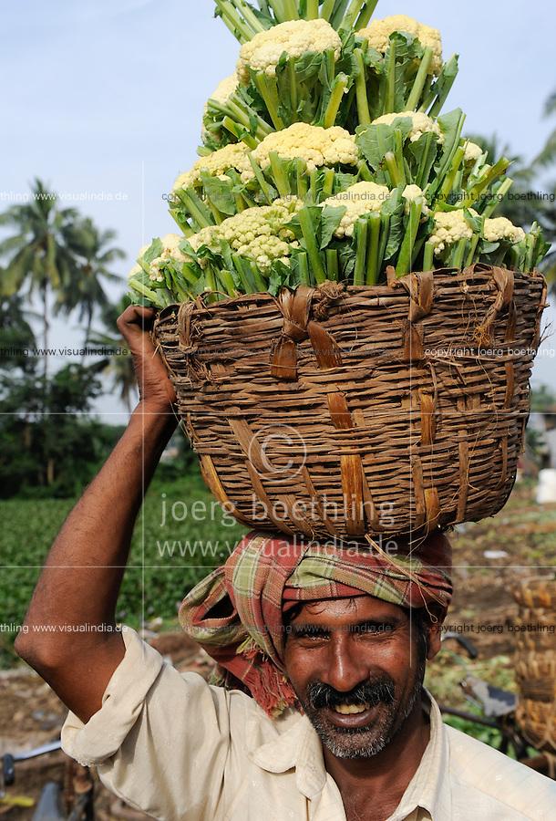 INDIA Orissa, Raygada, man carry cauliflower to the market / INDIEN Orissa Raygada, Bauer traegt Blumenkohl zum Verkauf auf dem Markt