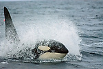 Norway - Orca Tours
