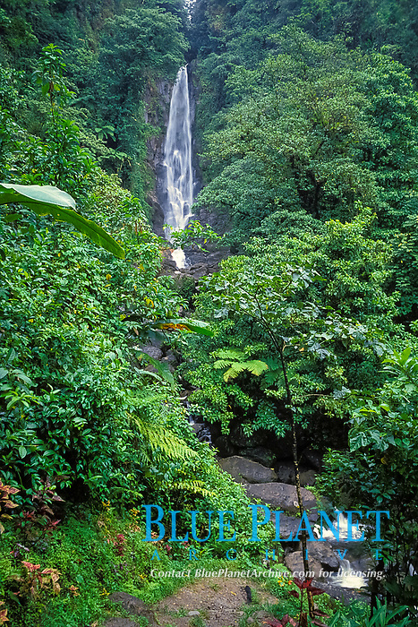 the hot side of Trafalgar Falls, a hot and cold waterfall, Commonwealth of Dominica (Eastern Caribbean), Atlantic