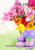 Isabella, EASTER, OSTERN, PASCUA, photos+++++,ITKE161458,#e# easter tulips