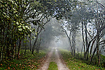 Neblina em estrada de terra na Serra do Mar, São Paulo. 2003. Foto de Juca Martins.