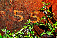 Nettles grow through the remains of Deeside Raiway carriage coach number 55 on Royal Deeside. The ruined coach used to run on The Deeside Railway Line. <br /> www.dsider.co.uk online magazine, photography courses by Bill Bagshaw photograpers Aboyne.