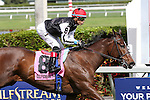 HALLANDALE BEACH, FL - MARCH 04:  Celestine #8 wth jockey Jose L Ortiz on board, wins the Sand Springs Stakes at Gulfstream Park on March 04, 2017 in Hallandale Beach, Florida. (Photo by Liz Lamont/Eclipse Sportswire/Getty Images)