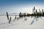 The landscape of the Vuntut Gwitchin First Nation near Old Crow, Yukon Territory, Canada.