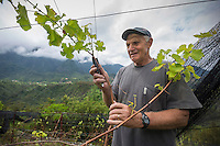 France, île de la Réunion, Parc national de La Réunion, classé Patrimoine Mondial de l'UNESCO, Cirque de CIlaos, Cilaos, ChristianTurpin, viticulteur dans ses vignes  le Cilaos est un vin de pays,  vin de montagne produit dans le cirque de Cilaos, à la Réunion. C'est l'un des seuls vins français produits dans l'hémisphère sud. Il bénéficie d'une IGP.//  France, Reunion island (French overseas department), Parc National de La Reunion (Reunion National Park), listed as World Heritage by UNESCO, cirque of Cilaos,  Cilaos, ChristianTurpin, winegrower in his vineyard, the Cilaos is a wine country, mountain wine produced in Cilaos, Reunion. This is one of the only French wines produced in the southern hemisphere. It enjoys an IGP.<br /> <br /> Auto n°: 2014-101